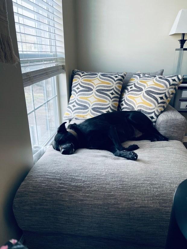 Dog sleeping on chair
