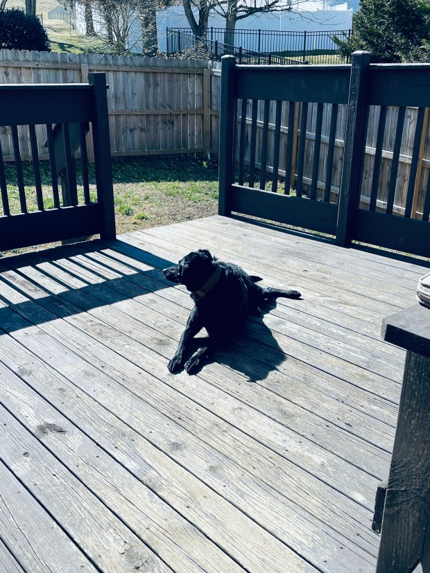 Dog laying on deck in sun