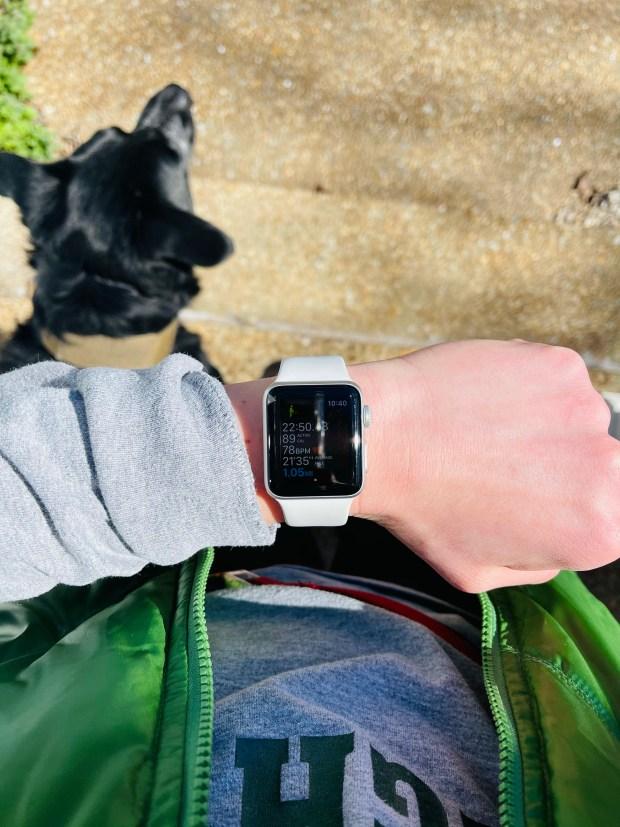 1 mile dog walk statistics