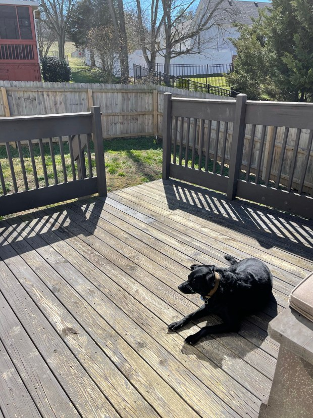 Chance laying on deck in sunshine