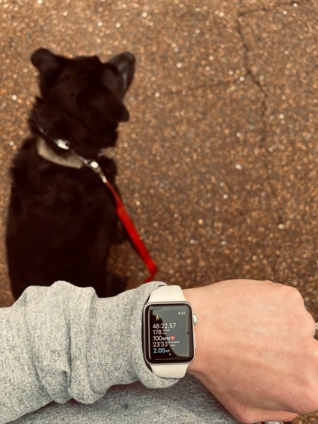 2 mile dog walk