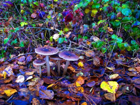 magic-mushrooms-shrooms-psychedelic-psilocybin
