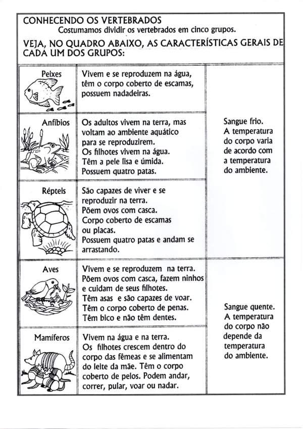 Atividade de Ciências-Vertebrados e Invertebrados-Folha 1
