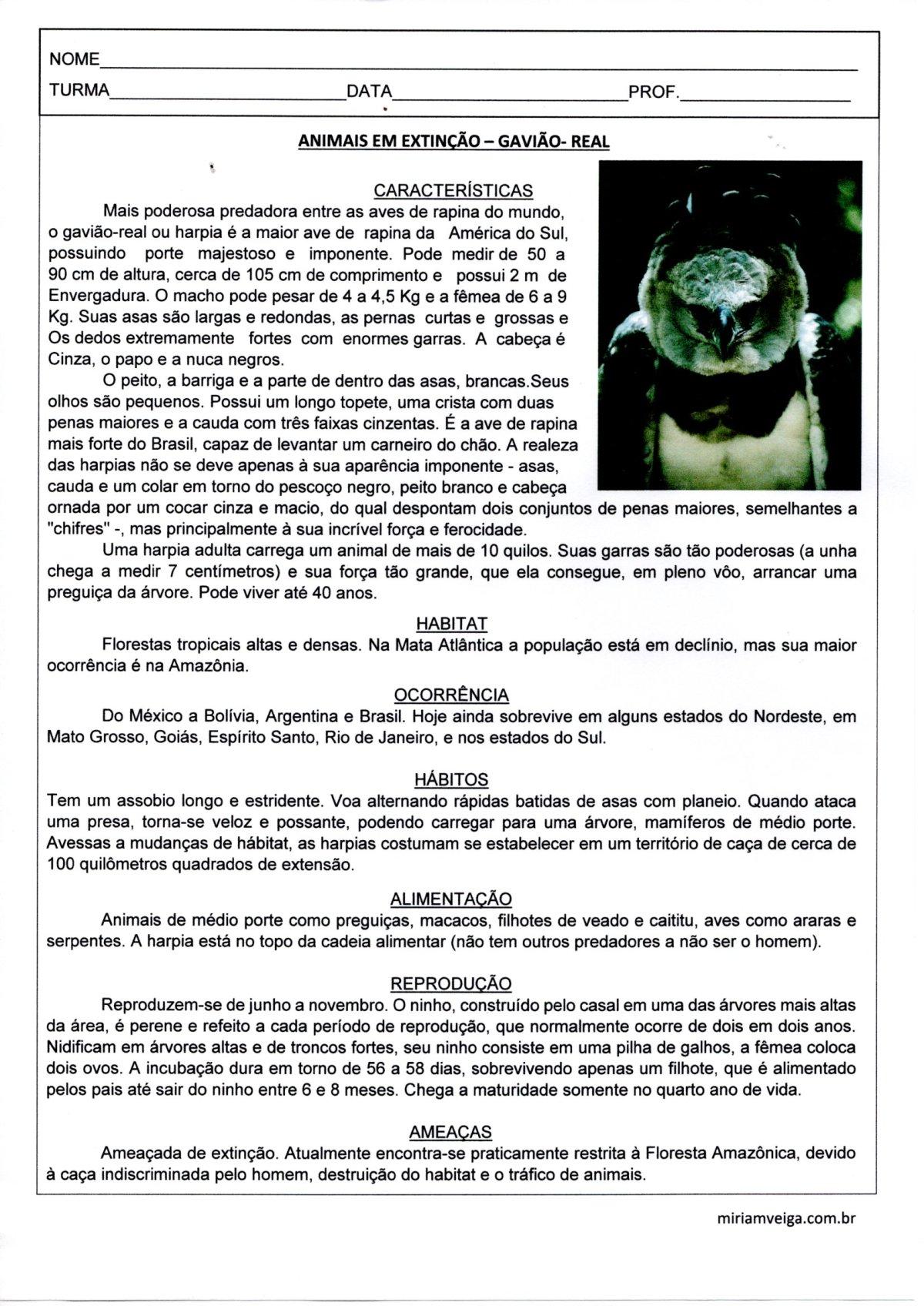Animais em extinção-Gavião Real-Texto