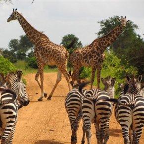 Tanzania (1)