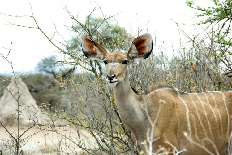 Namibia wildlife-11