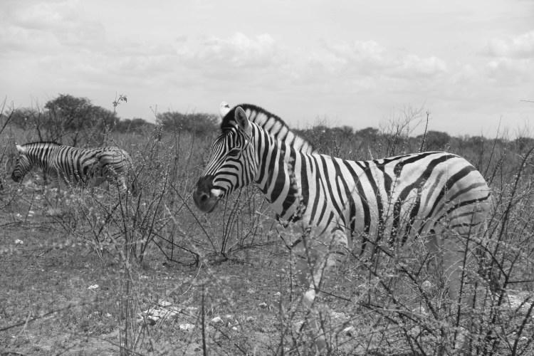 Namibia wildlife-14