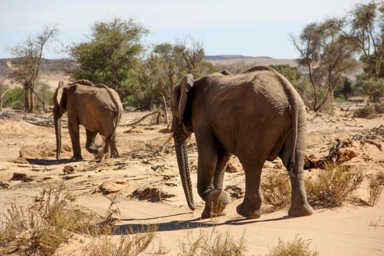 Namibia wildlife-16