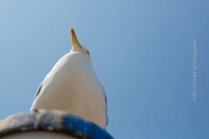 Vögel_MF-18