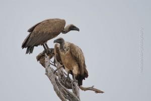 Vögel_MF-6