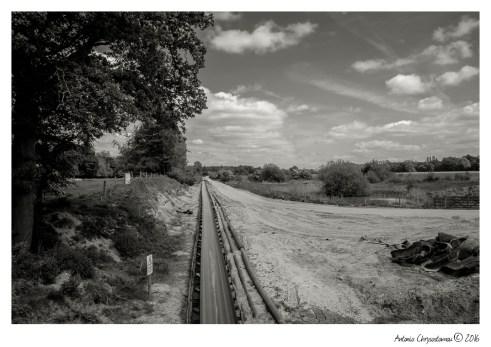 LowerWithington_011
