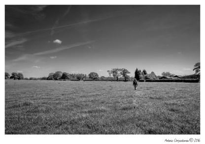 LowerWithington_022