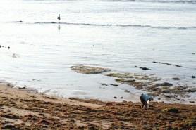 Mencari rumput laut dan mencari ikan