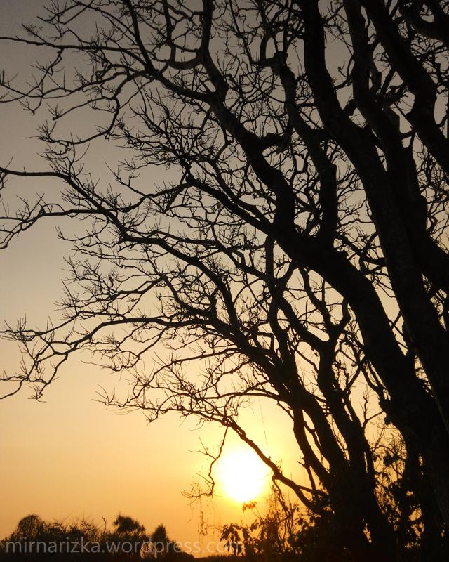 Kalau musim kemarau gini, banyak pohon yang meranggas. Ranting-rantingnya cantik!