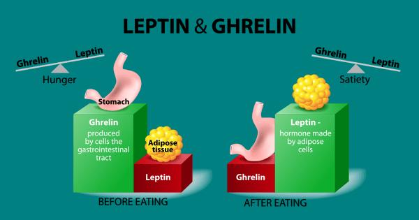 La leptina disminuye el hambre. La grelina aumenta el hambre.