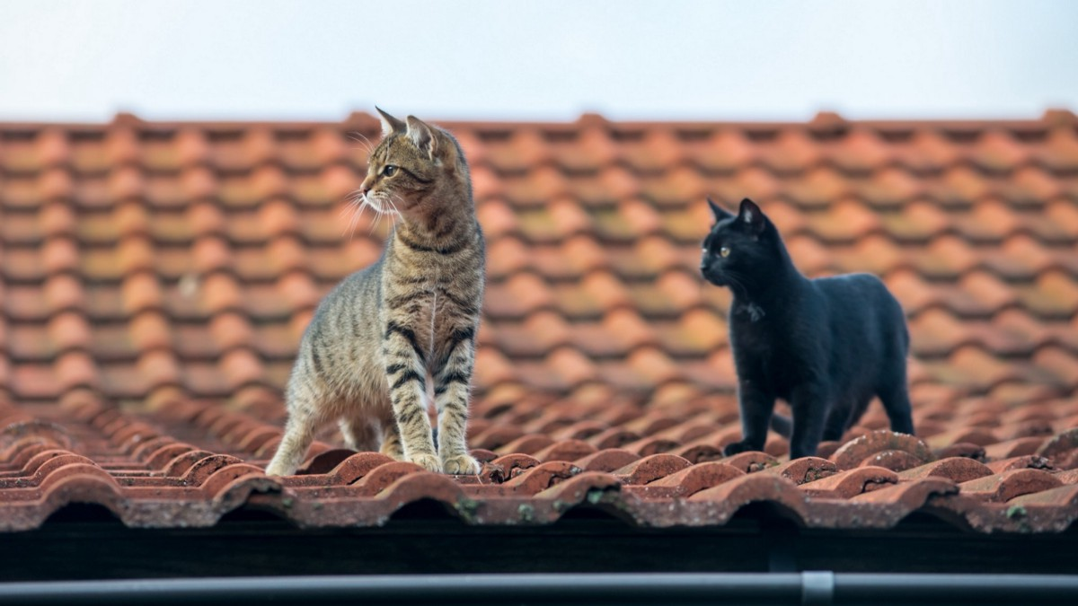 「熱鐵皮屋頂上的貓」 - 火山腳下的二三事 - Medium