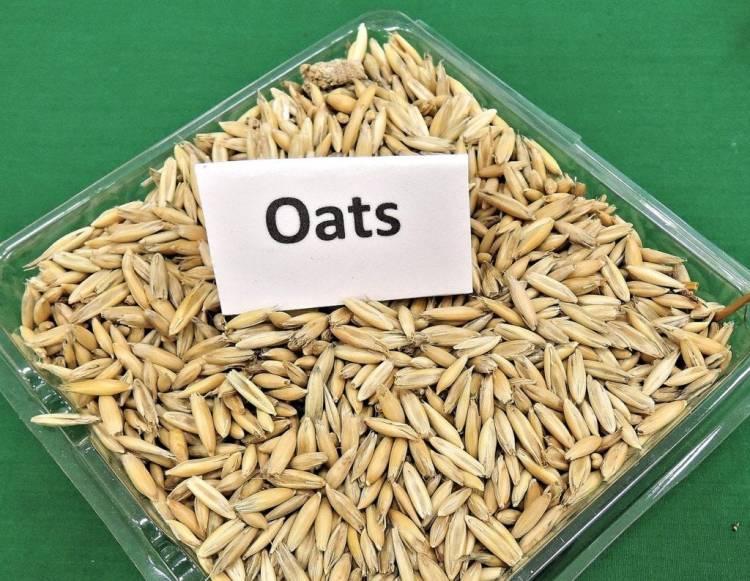 whole oats