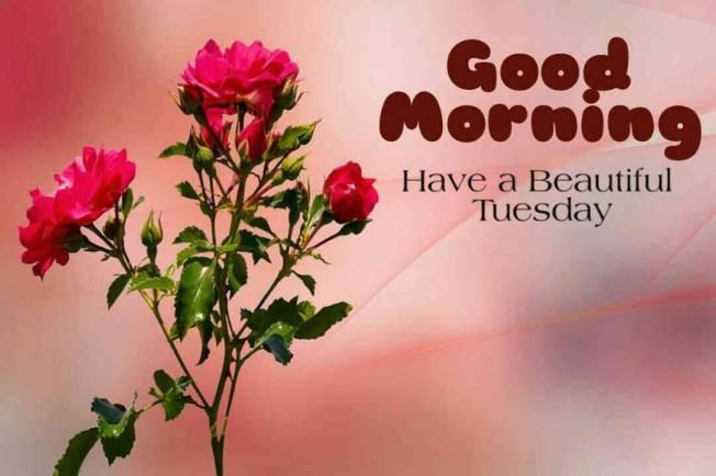 Good Morning Tuesday, Good morning Tuesday Blessings | by Raj Malhotra | Medium