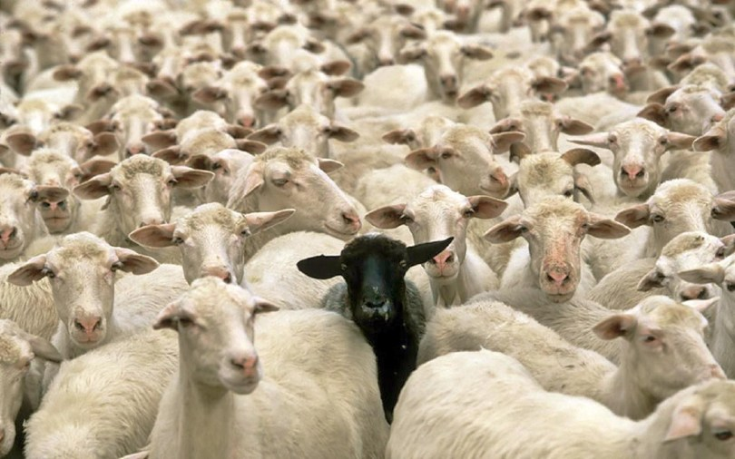 Why Being a Black Sheep is the Only Way to Become a Billionaire