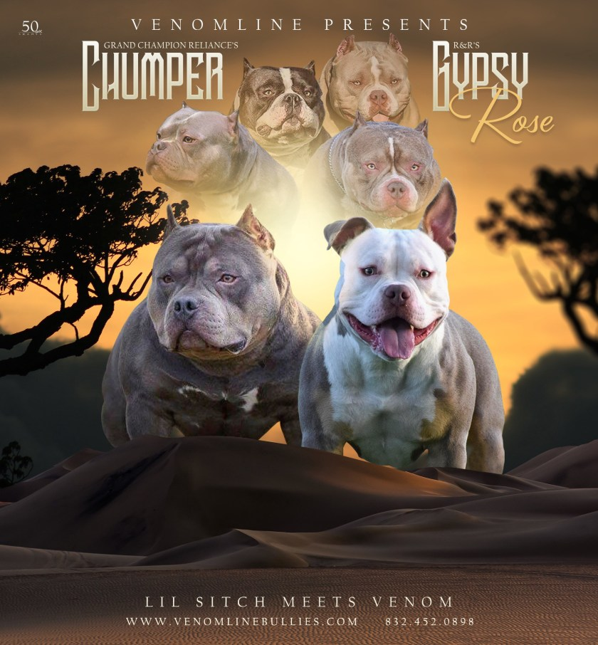 Louis V Line's Venom | Venomline | Top American Bully Bloodline | Top Pocket Bully Breedings & Puppies For Sale