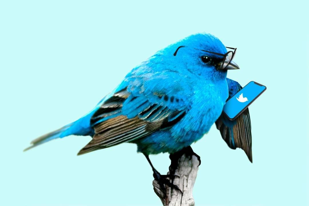 A bird tweeting while it tweets.