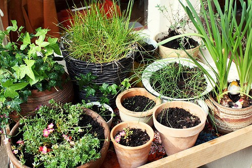 Turn Your Apartment Into A Small Garden Desiree Thomson