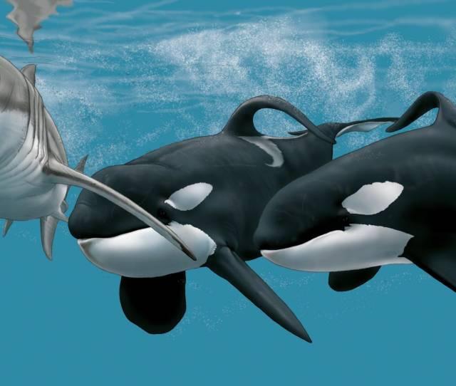 Ekologi Ikan Hiu Dan Ikan Paus Part One Kecerdasan Buatan
