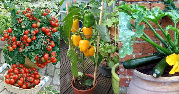 Planning for vegetable gardening ? Check these terrace vegetable ...