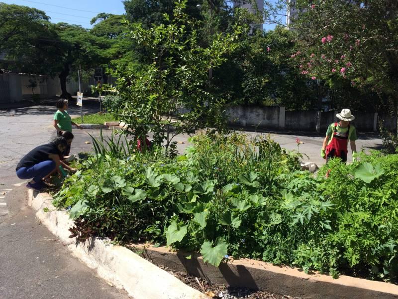 Resultado de imagem para imagens de jardins de chuva