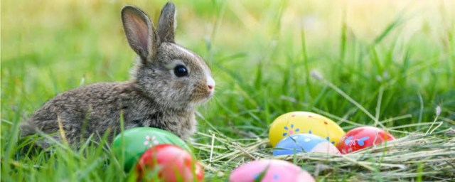 Easter bunnies, Eggs and other Easter traditions demystified. 2 MUGIBSON WRITES
