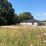 本館とコスモス畑