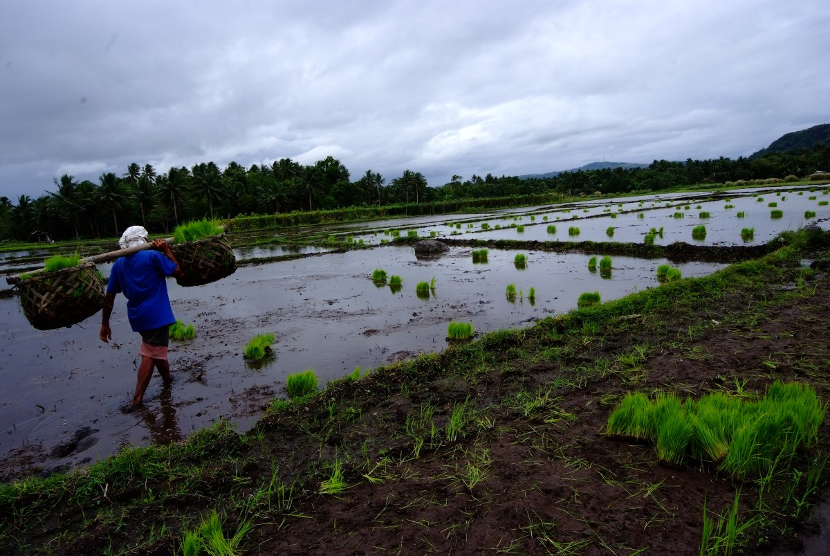 Of Rice and Men: Cultivating the Next Green Revolution