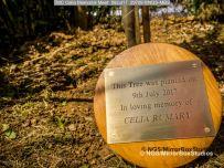 TMC Celia Memorial Meet