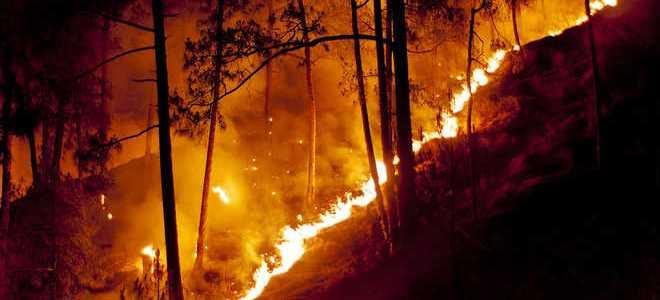 उत्तराखंड – अब जंगलों में आग की घटनाएं बढ़ रही हैं, हर साल की तरह