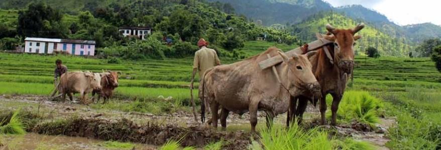 उत्तराखंड – योजना बनी किसानों के कल्याण के लिए, लेकिन फायदा उठा रही हैं बीमा कंपनियां