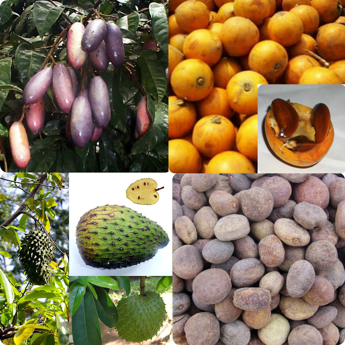 Haiku: Dreaming Of Exotic Fruits… | Mirth and Motivation