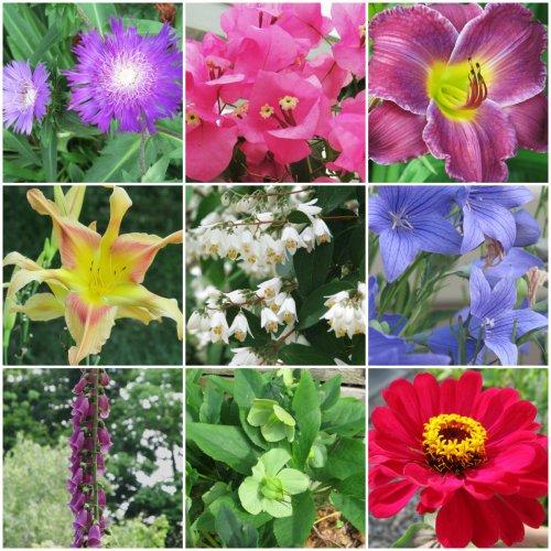 Weekly Photo Challenge: Changing Seasons... Summer Flora