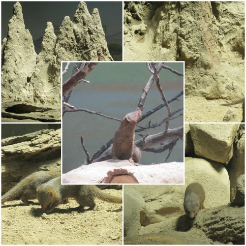 Weekly Photo Challenge: Home... Mongoose Home