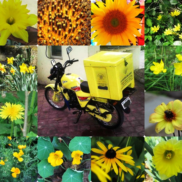 Weekly Photo Challenge: Yellow - A collage of yellow flowers and a motorcycle