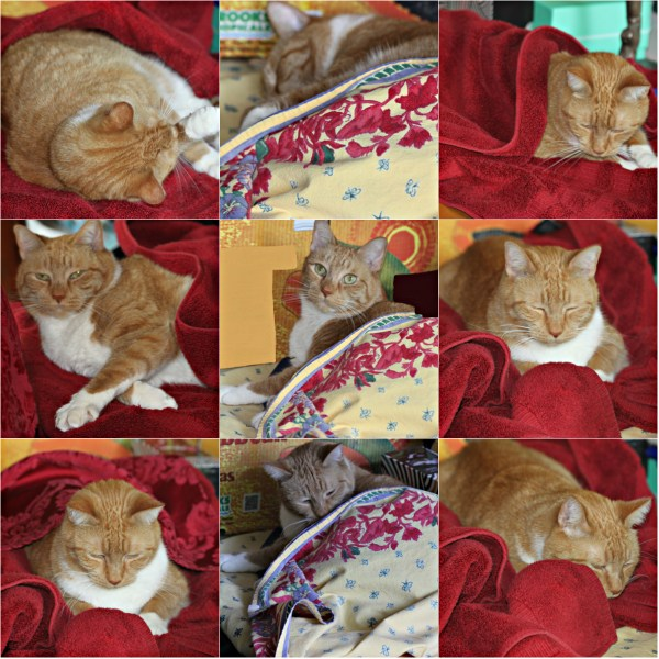 Weekly Photo Challenge: ENVELOPED WITH LOVE - Cat love