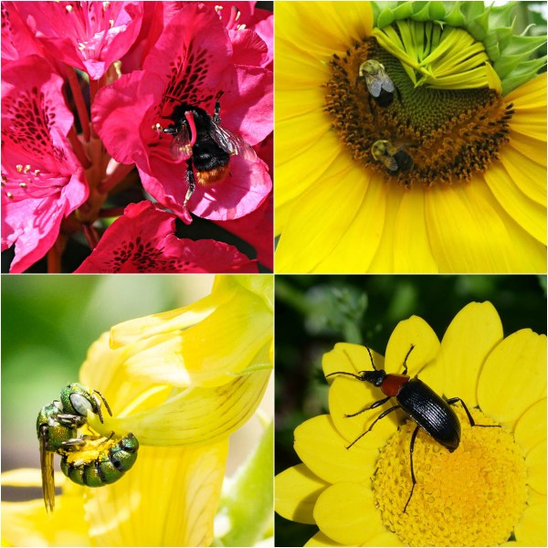 Haiku: End Of May... Busy bees and more