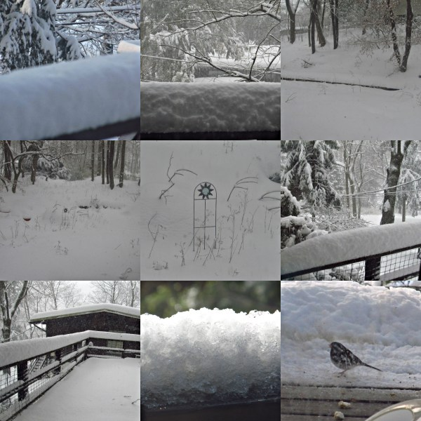 Weekly Photo Challenge: Forces of Nature - Snowstorm