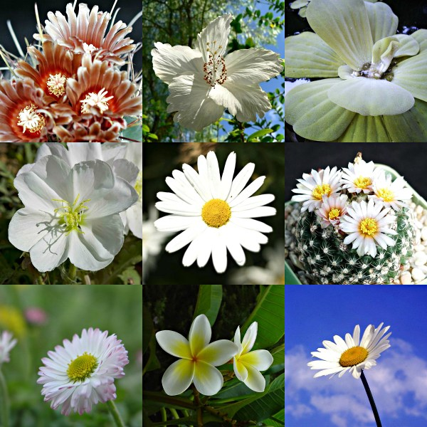 Motivation Mondays: SIMPLICITY - floral in bloom