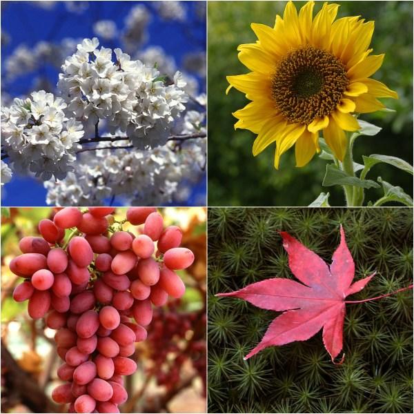Haiku: Dear Mom - Collage of symbols of the 4 seasons.