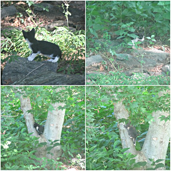 Weekly Photo Challenge: INSPIRATION - Wild kittens at play in my backyard
