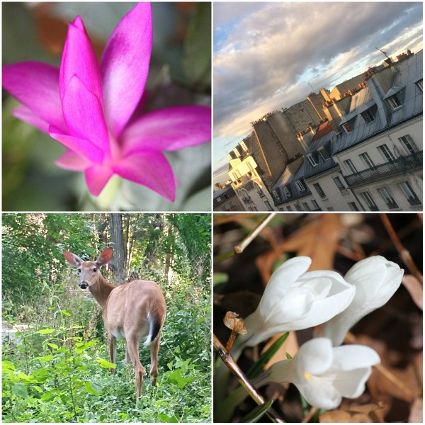 Weekly Photo Challenge: INSPIRATION - Sunset view of rooftops on Montparnasse & Flora and Fauna in my yard