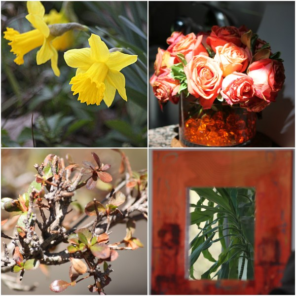 Weekly Photo Challenge: INSPIRATION - Flora