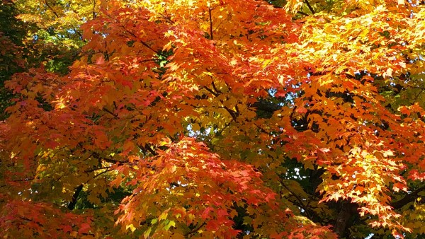 Weekly Photo Challenge: EXTRAORDINARY - Wide ranging colors of Autumn