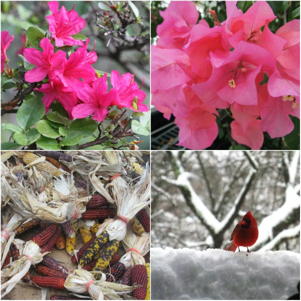 Weekly Photo Challenge: TRANSITION - Seasonal change from Spring, to Summer, to Autumn, to Winter