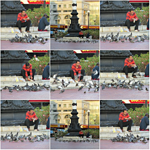 Weekly Photo Challenge: GATHERING - All sorts of Gatherings; man and pigeons